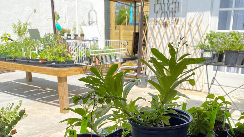 Shop for Florida native and edible plants